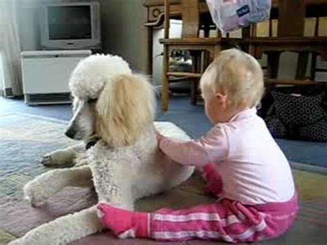 becoming friends of time disability timefullness and gentle discipleship studies in religion theology and disability books baby being gentle with standard poodle