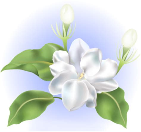 sampaguita flower this sampaguita flower artwork is a