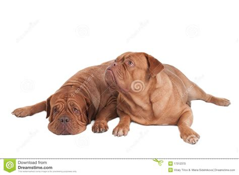 puppy waking up dogs waking up stock photo image 17312370