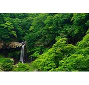 Nature Landscape Forest Tropical Waterfall