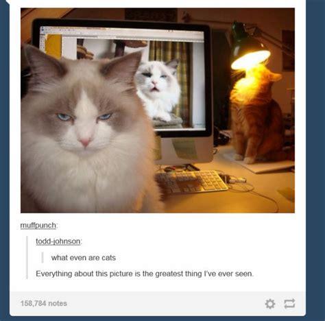Funny Cat Memes Tumblr - cat memes tumblr www imgkid com the image kid has it