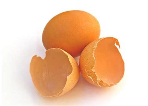 Bubuk Kulit Telur 1001 dahsyatnya manfaat kulit telur dan cara penggunaanya