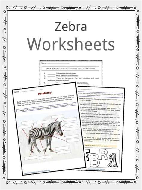 zebra printable information zebra facts worksheets species habitat information for