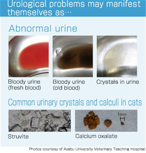 what color is your urine supposed to be cat urine