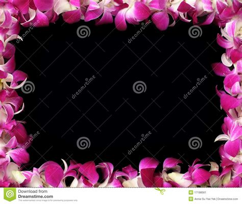 orchideen gestell orchids frame stock image image 17198561