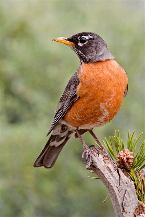 list of birds of connecticut wikipedia