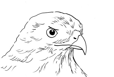 hawk coloring pages hawk coloring page bell