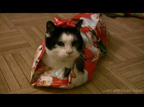 how to wrap a cat for christmas youtube