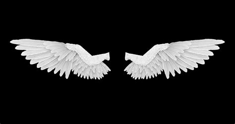wings background white wings with an alpha channel motion background