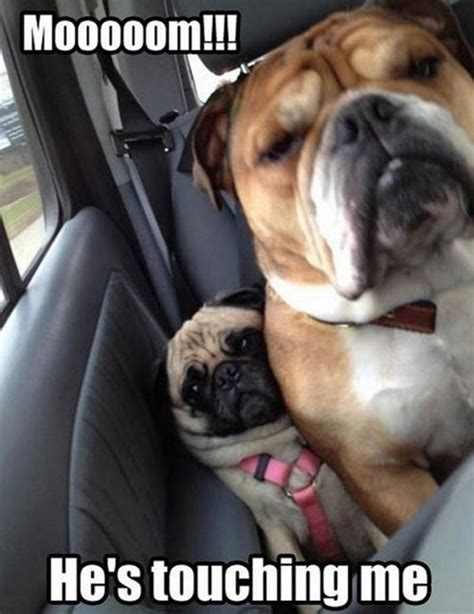 Dog Mom Meme - mom he s touching me funny pug meme funny pug pictures