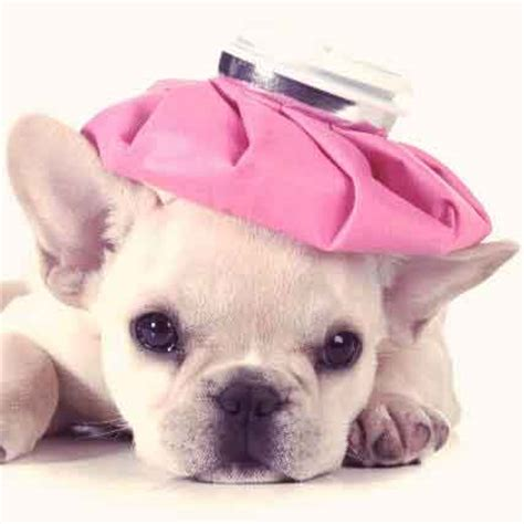 how to get rid of puppy diarrhea how to get rid of diarrhea in puppies petcarerx