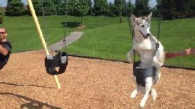 swing gif happy swing gif find on giphy