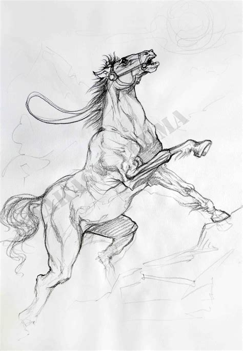 free horse sketch portfolio