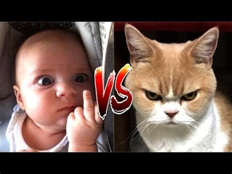 pug vs baby cat vs baby in the world compilation 2 mkls pug