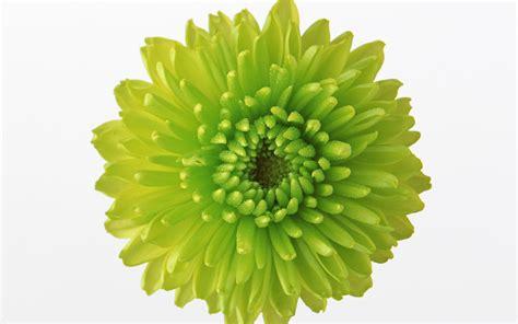 wallpaper of green flowers green flowers download 18 high resolution wallpaper