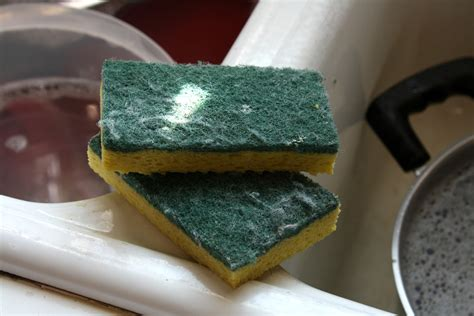 kitchen sponge the real dirt on kitchen sponges here s the way to clean