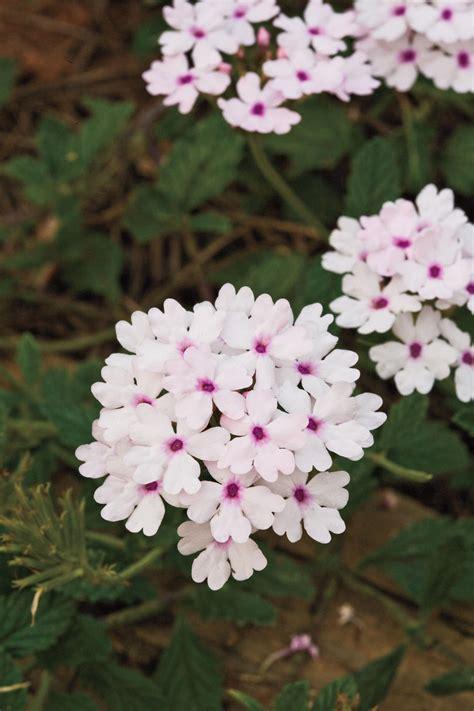spring gardening flowers southern living