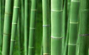 high resolution bamboo plant backgrounds hd nature wallpapers
