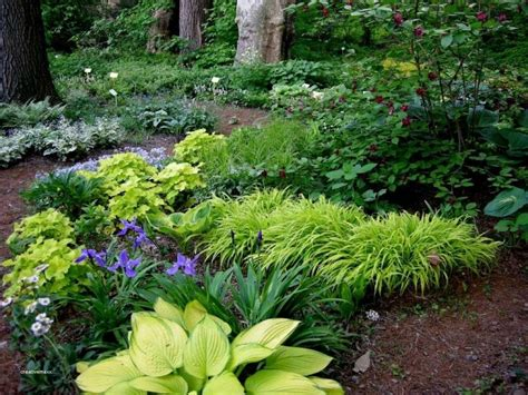 design flower bed shade shade garden design plans beautiful great ideas shade