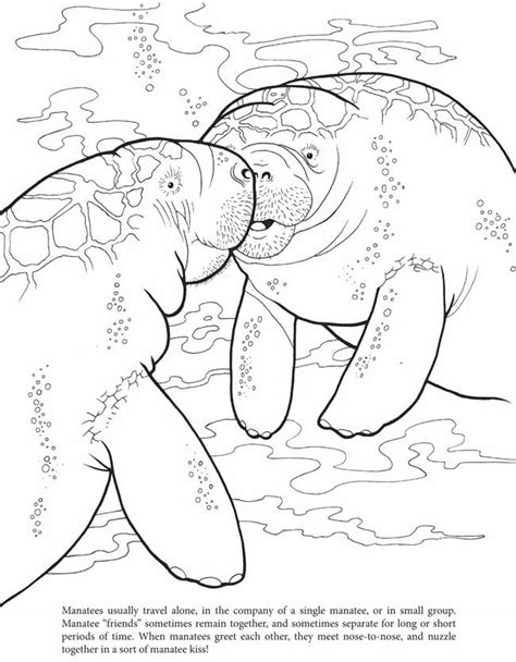 manatee coloring book dover mp k week 1 pinterest