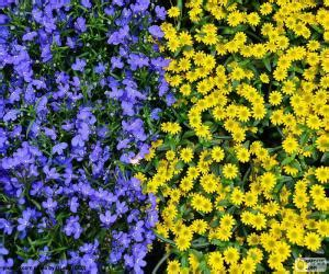 puzzle fiori puzzle di fiori e gialli e rompicapo da stare