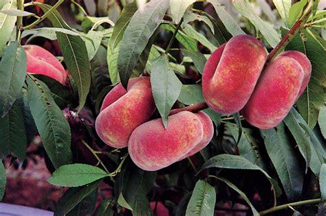 fertilizing fruit trees how to grow prune and fertilize trees hgtv