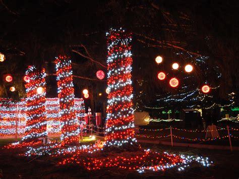 lights on tree trunk tree trunk lights rainforest islands ferry