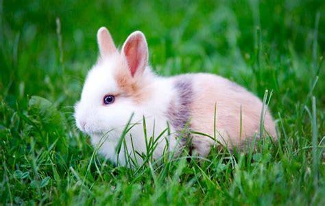 femmina o maschio test come capire se un coniglio 232 maschio o femmina e a quanti
