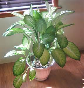 House Plat Living Stingy The Secret To Houseplants