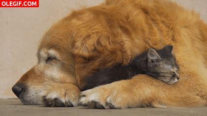 que son imagenes gif gif qu 233 agusto est 225 el gato durmiendo entre las patas del