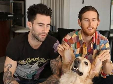 adam levine golden retriever 17 best images about adam pets on today show behati prinsloo and high five