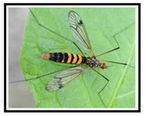 insetti appartamento piante in casa cura dai parassiti