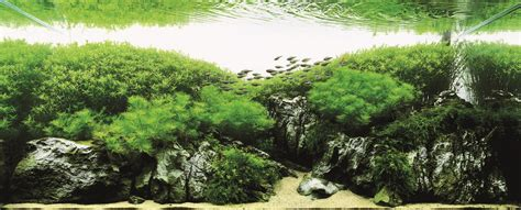 Japanese Aquascape Artist by Rip Takashi Amano Justin Fox