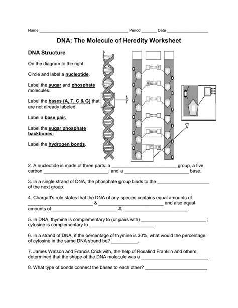 Dna The Molecule Of Heredity Worksheet by Uncategorized Dna The Molecule Of Heredity Worksheet