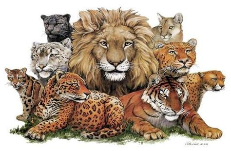 wallpaper of cat family the animal hangout images a wild cat family wallpaper and
