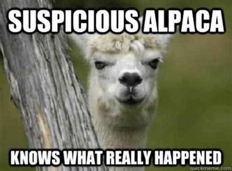 Funny Llama Memes - alpaca and llama memes