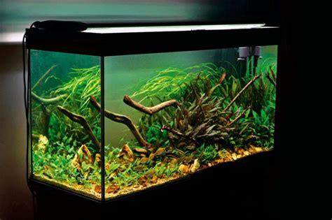 aquascape zonder co2 een aquarium zonder co2 bemesting is dat zelfs mogelijk