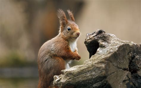 bing pictures as wallpaper squirrel squirrel full hd wallpaper and background 2560x1600 id
