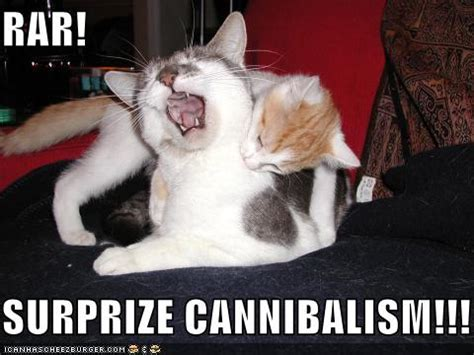 Cannibal Meme - funny pictures lolcats