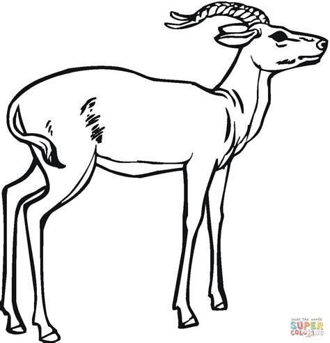 printablecoloringpages us antelope coloring pages preschool and kindergarten