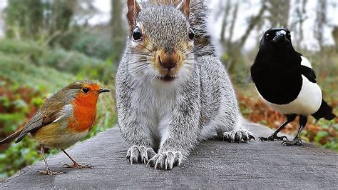 best 28 squirrel bird 25 best ideas about squirrel