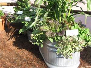 container vegetables vegetable gardening