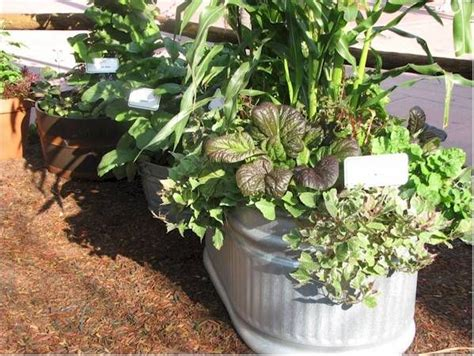 Container Vegetable Gardening Container Vegetables Vegetable Gardening