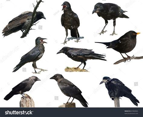 Vs Vs Blackbird Imgkid Com The Image