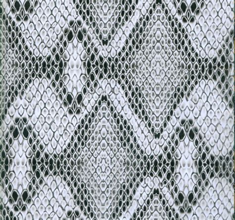black and white diamond pattern snake razorback snake skin infected homeinfected home