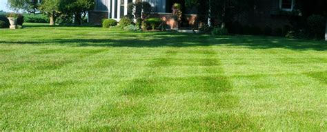 Course On Lawns What You Should by What Should Lawn Care Cost