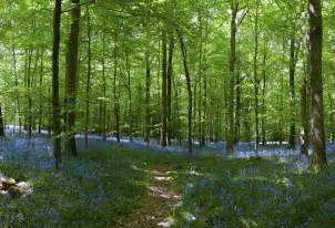 wall mural forest bluebell forest wall mural 12 wide by 8 high ebay