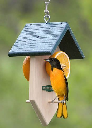 top 28 baltimore oriole feeder placement best 25 bird