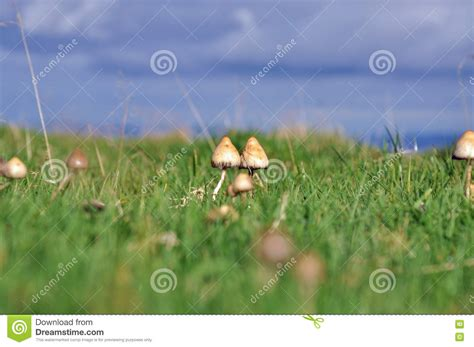 mt rugged magical seed magic mushrooms and dandelions with seeds on a fairytale branch vector illustration