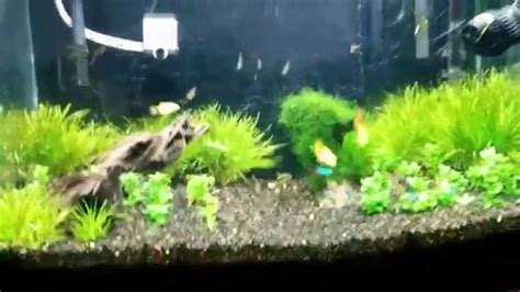 aquascape youtube simple aquascape youtube